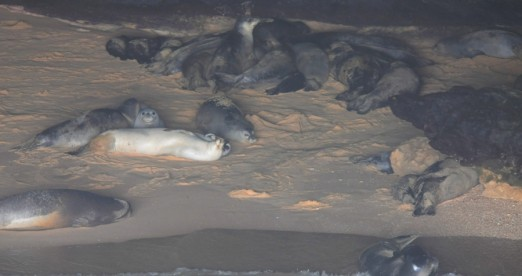 Monk seals inside cave M.Cedenilla CBD-Habitat