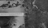 Cousteau-y-foca-monje-Fundacion-CBD-Habitat-3